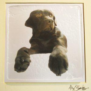 dog art photo glass